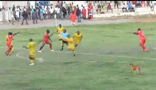 violence_stade_semassi